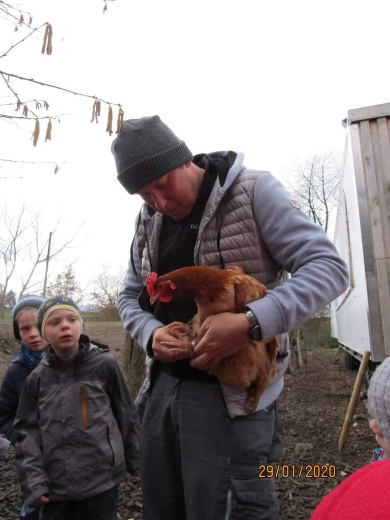 Der Hühnerbaron